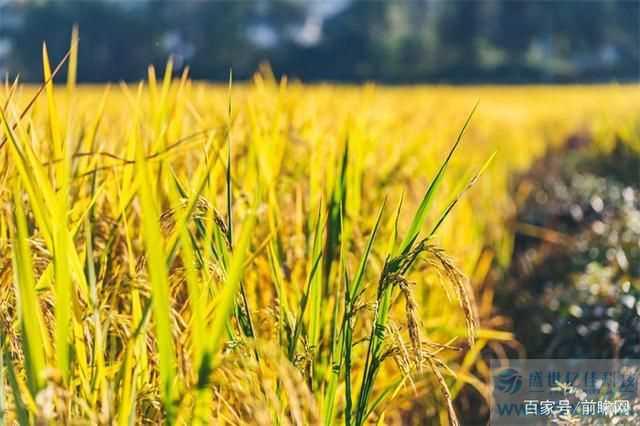 全球面临50年来最严重粮食危机,今年全球近7亿人处于饥饿状态